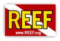 REEF.org